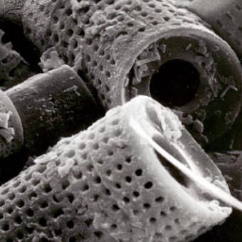 珪藻土の分子